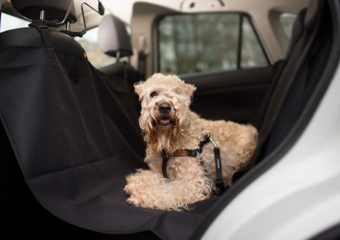 Jak zadbać o bezpieczeństwo i komfort zwierzaka w podróży ?