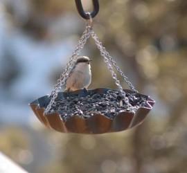 Dokarmianie ptaków  jesienią i zimą