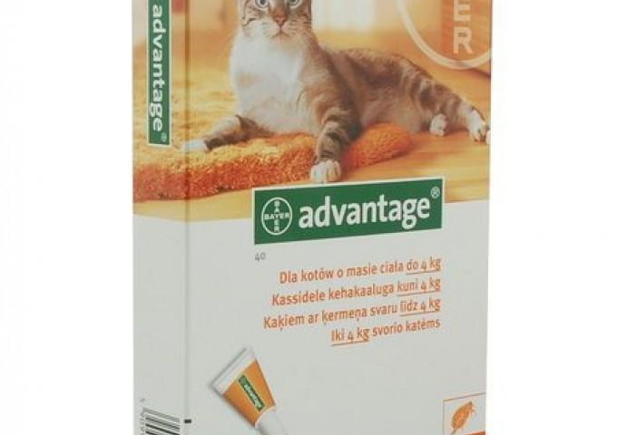 Bayer - krople dla kotów Advantage.
