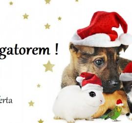 Magia Świąt z ZooAligatorem!
