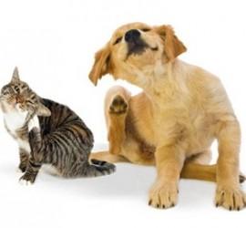 Nieproszeni goście? Jak zabezpieczyć naszego zwierzaka przed pchłami i kleszczami?
