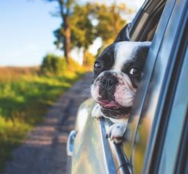 Jak dbać o psa podczas upałów?