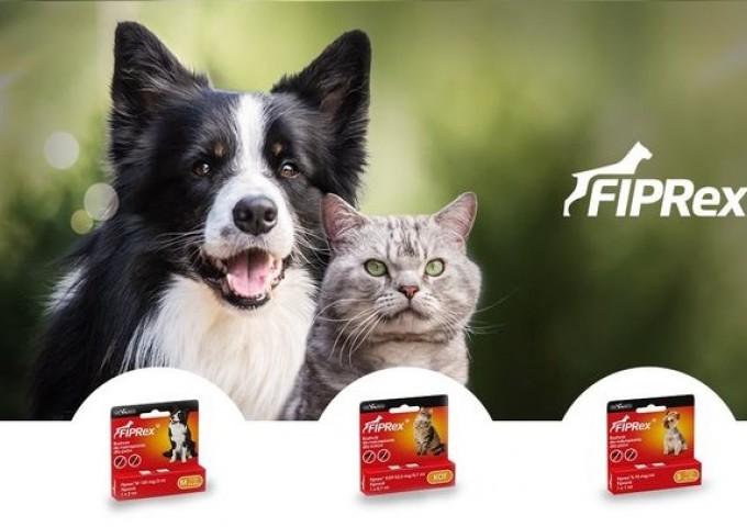 Choroby odkleszczowe u psów i kotów