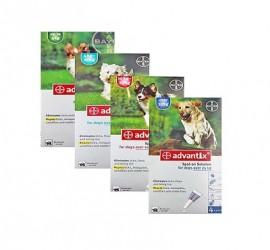 ADVANTIX - wygodny środek dla psów przeciwko pchłom, kleszczom i komarom