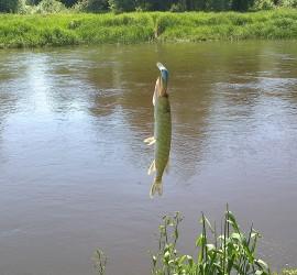 Łowienie na spinning - jak ?