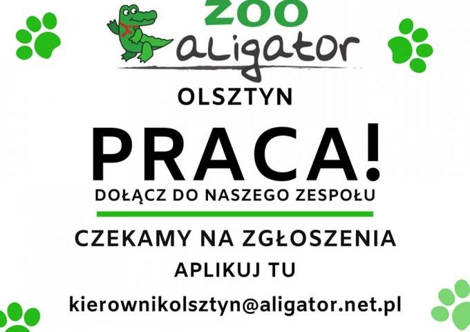 Zostań członkiem ekipy Zoo Aligator
