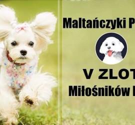 Maltańczyki Polska- V Zlot Miłośików Rasy