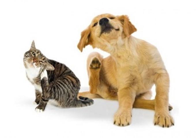 Nieproszeni goście - czyli jak zabezpieczyć naszego zwierzaka przed pchłami i kleszczami