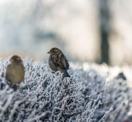 Zima trwa! Pamiętajmy o ptakach!