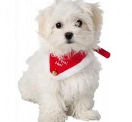 Świąteczna obroża z chustą dla kotów i psów TRIXIE